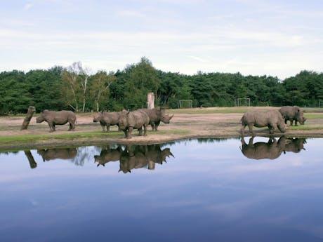 Safaricamp De Beekse Bergen nijlpaarden
