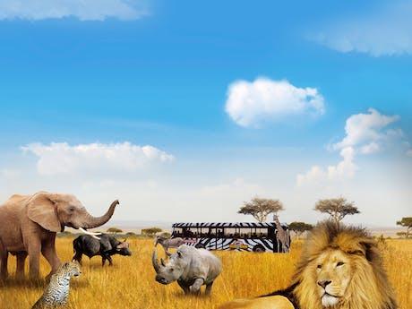 Safaricamp De Beekse Bergen dieren