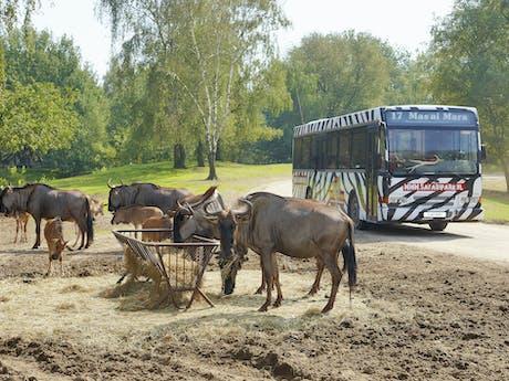 Beekse Bergen bustoer langs buffels