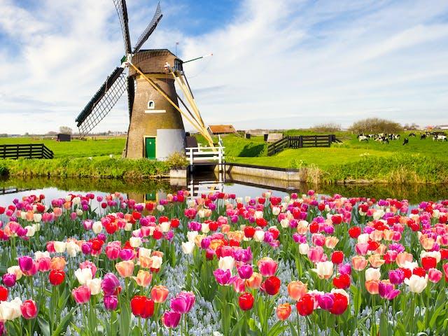 Tulpen en molens Nederland