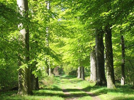 in_het_bos