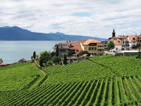 Lavaux wijnvelden bij meer van Geneve