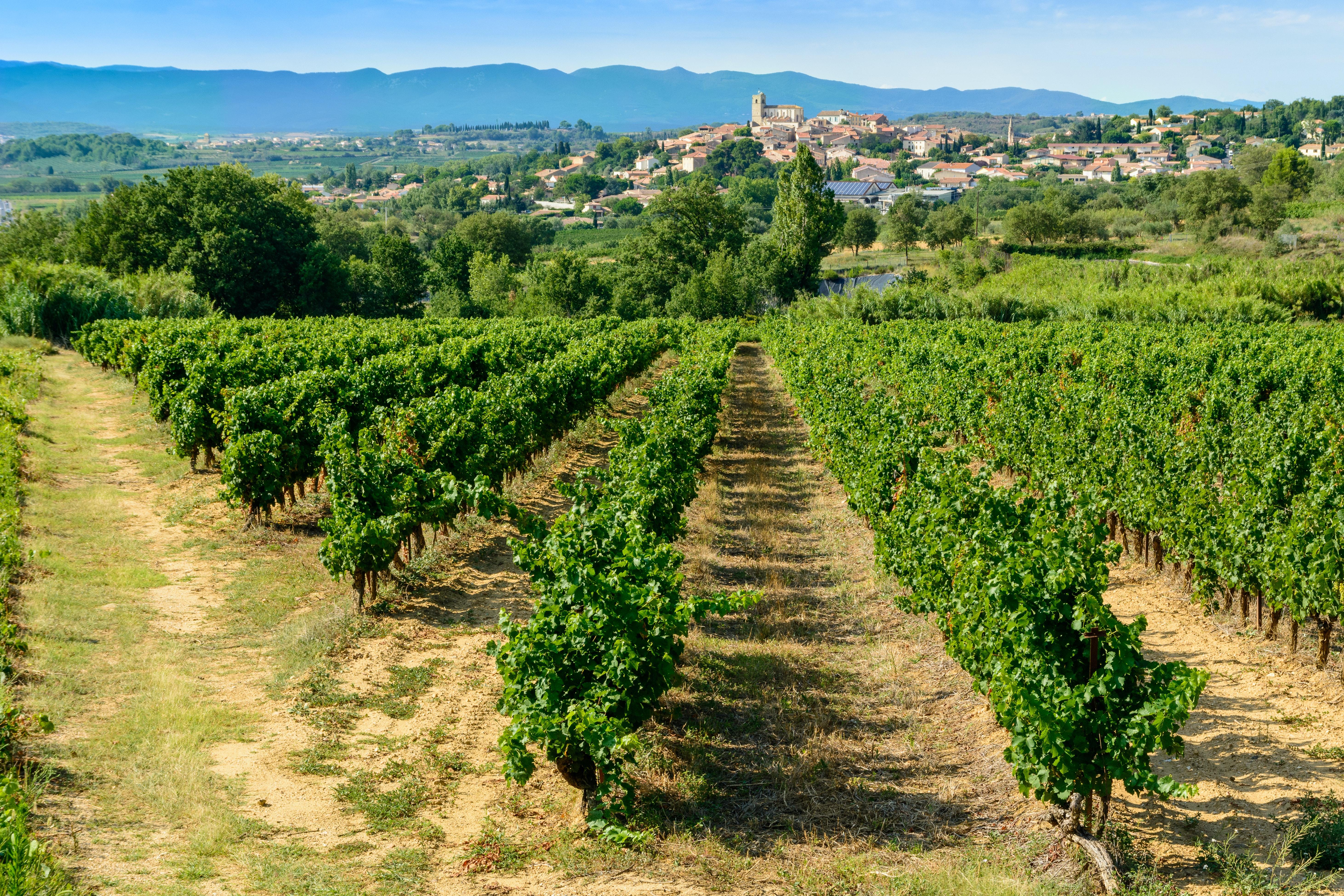 Beziers en wijngaarden
