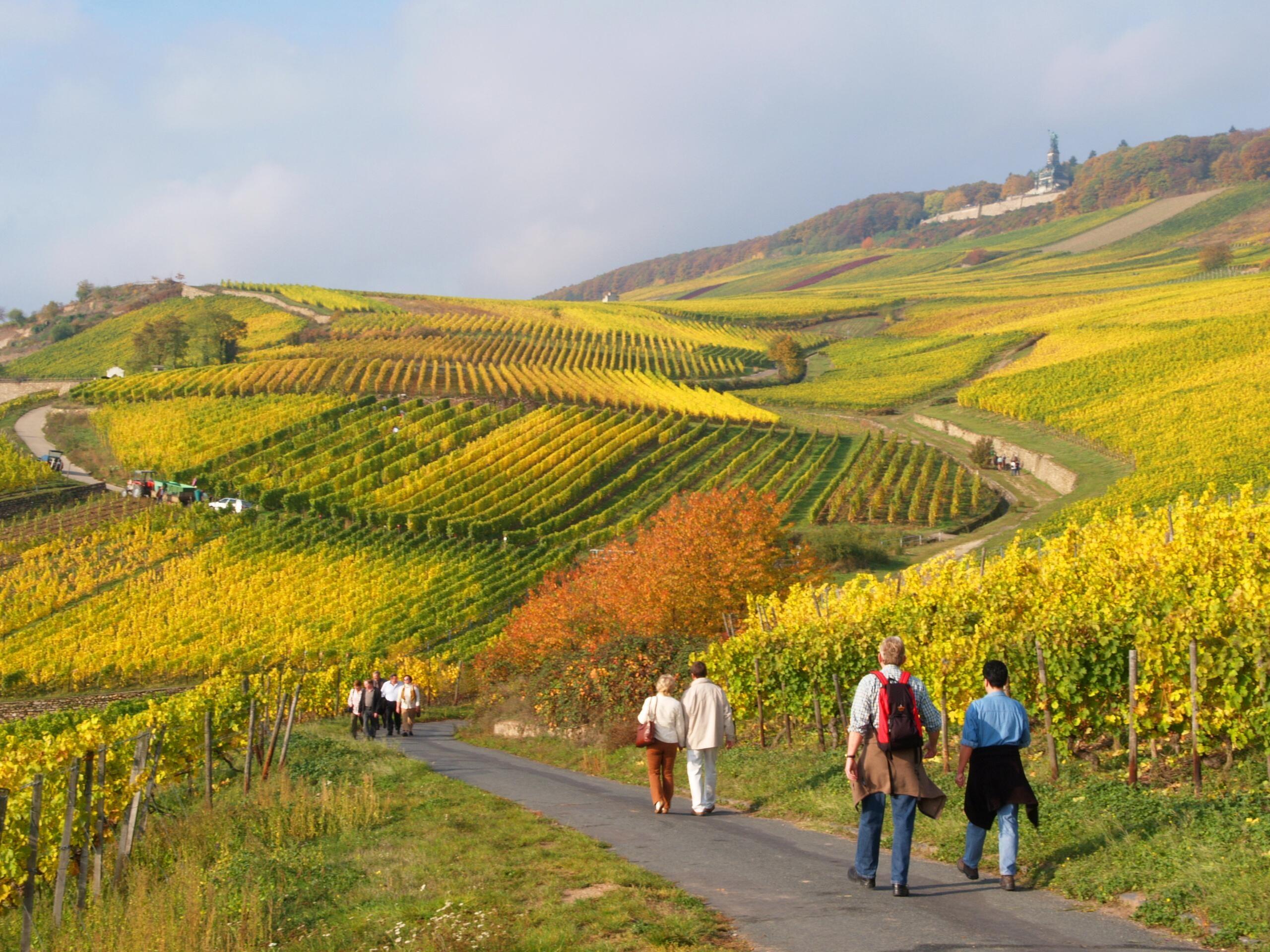 8-daagse wandelvakantie Rheinsteig 1e deel