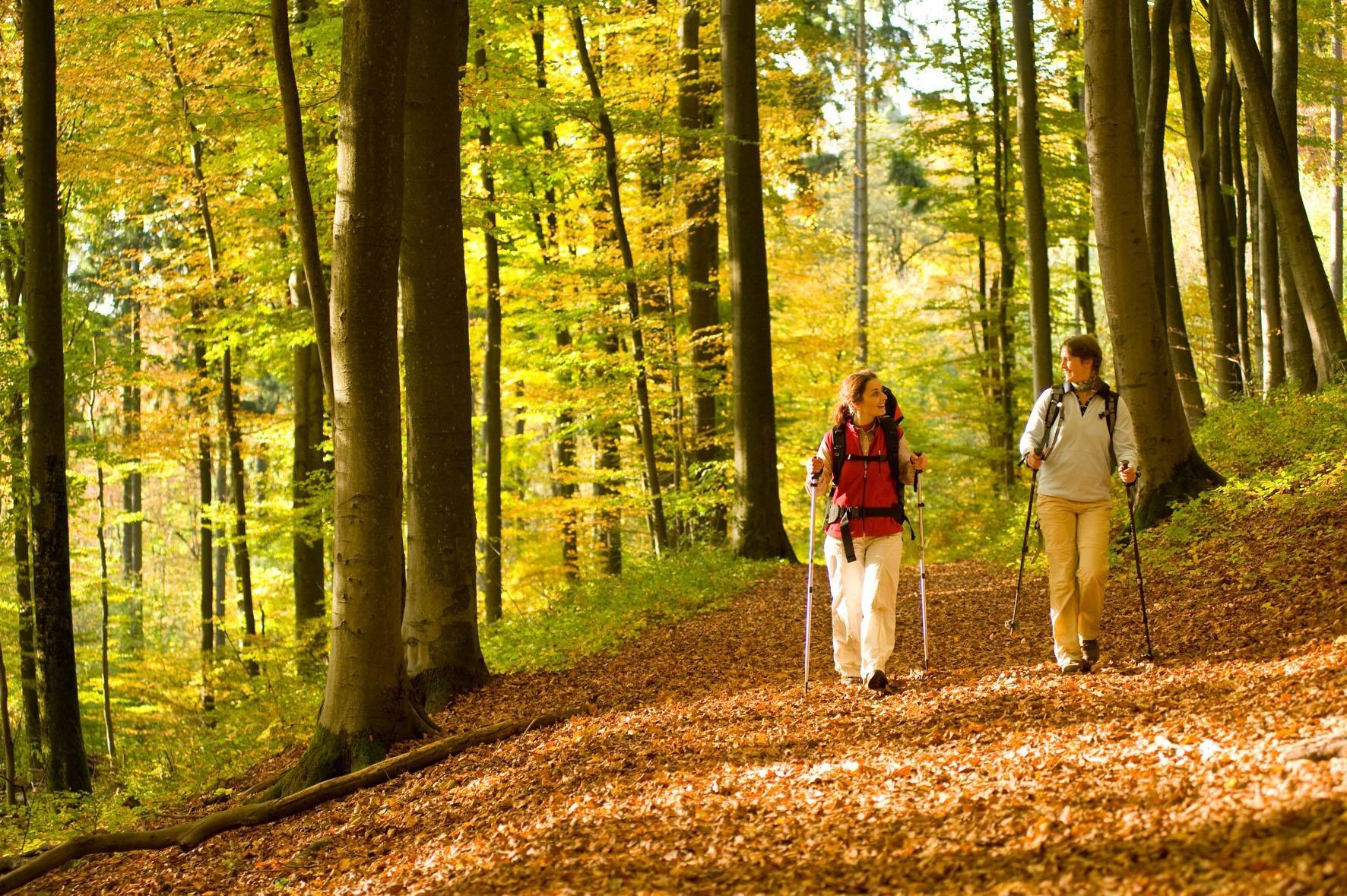 8-daagse wandelvakantie Westerwaldsteig