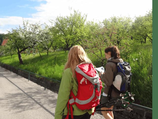 8-daagse wandelvakantie Wachauer
