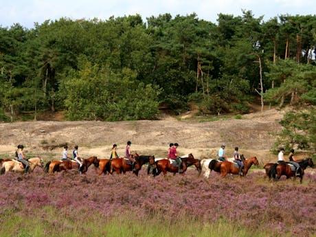 Paardrijden bij camping Duinhoeve