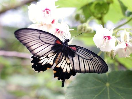 vlinder natuur