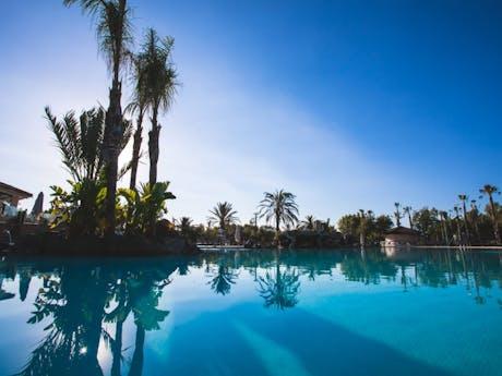 Palmbomen zwembad El Delfin Verde