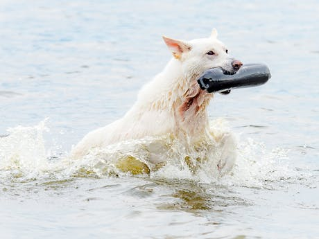 Meerwijck hond
