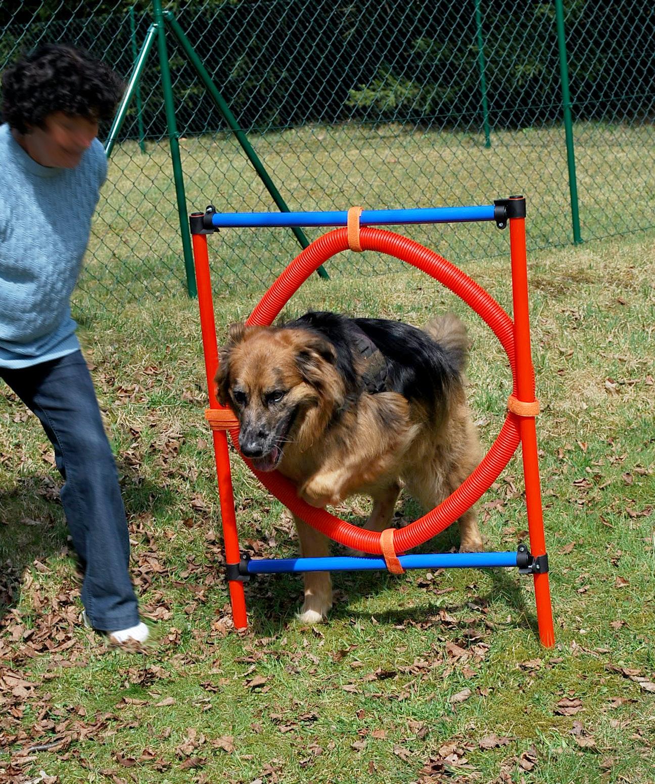 Honden spelen Knaus Viechtach