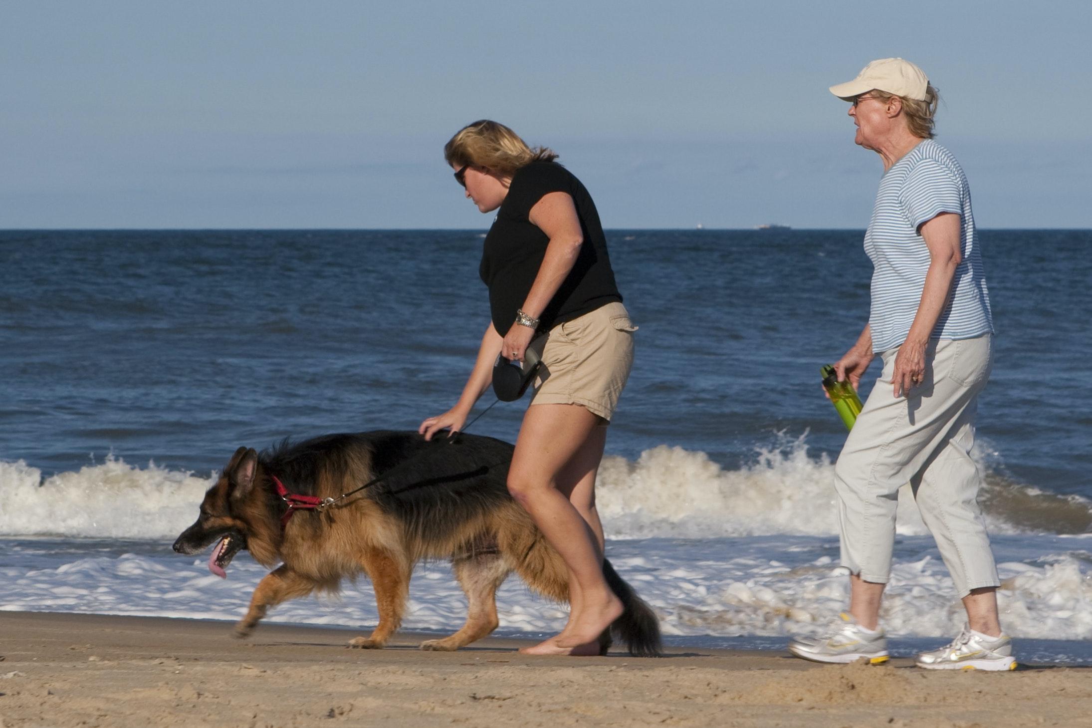 Met hond aan zee