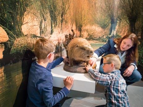 Biesbosch Museum 4
