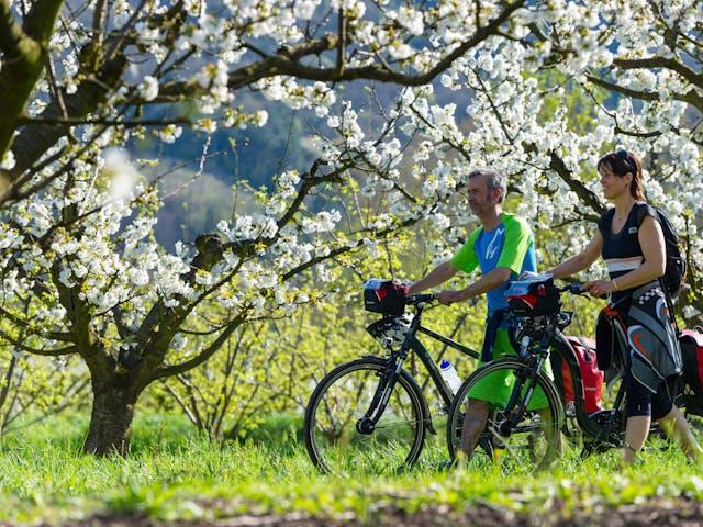 Safran Frankrijk fietsvakantie bloesem