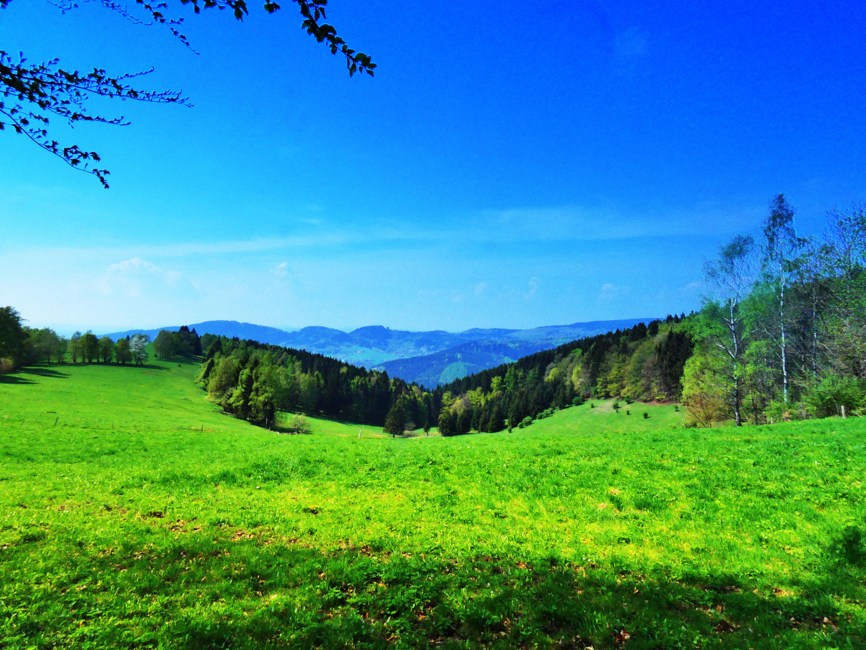 Ebertswiese en dal Rennsteig Thüringen