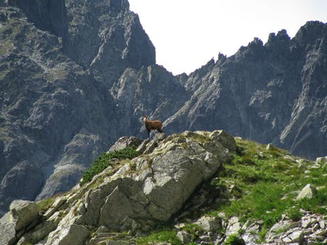 Polen Tatra gebergte natuur