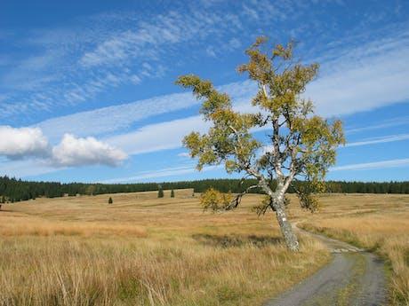 Polen wandelen algemeen natuur