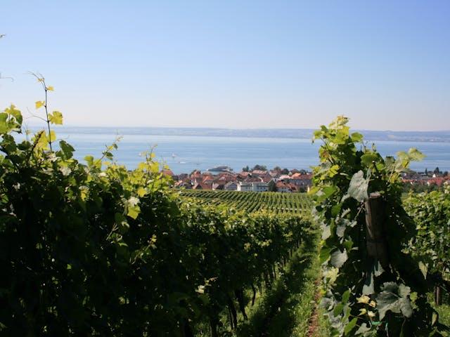 Bodensee wijnranken