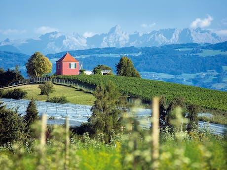 Bodensee zwiterse bergen