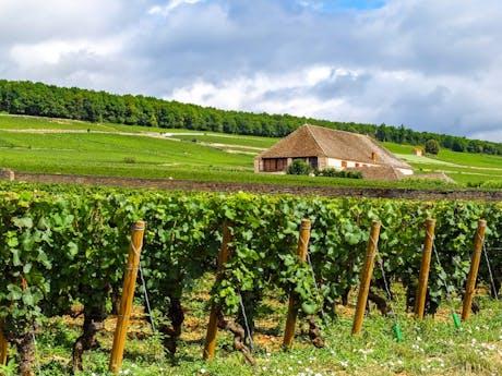 Wijnstokken France
