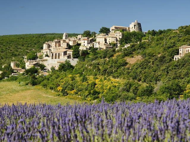 Provence Lavendelveld Frankrijk