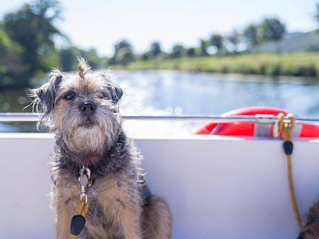 Hond varen le boat