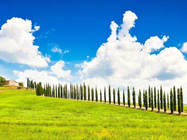 Toscane cipressen