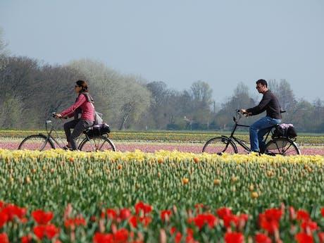 fietsen door de bollenvelden voorjaar