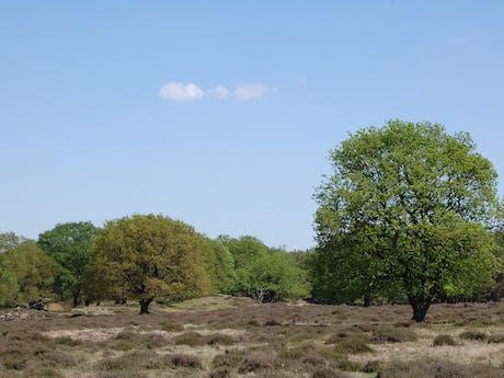 Fietsen op de Veluwe Heidevelden