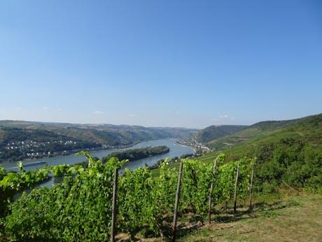 Rheinsteig blik op de Rijn met wijnbergen